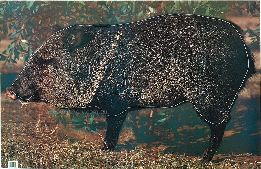 Javelina Animal Target Face Photograph